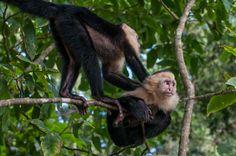 Manuel Antonio National Park in Costa Rica #ecotourism