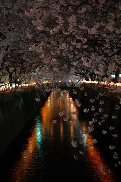 Meguro river's Sakura by gleam_df, via Flickr