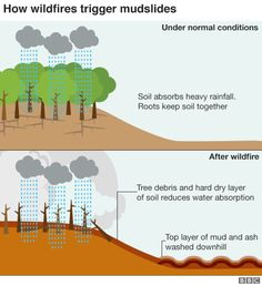 Infographic on how wildfires trigger mudslides