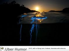entertaining-photos-63.jpg (550×412)