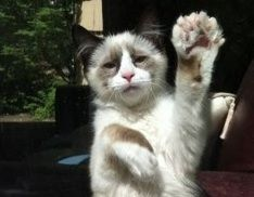 For you, Toby!!!  5 Fascinating Facts About Polydactyl Cats