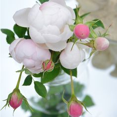 High quality images of plants (fungi are allowed! Green Flowers, Love Flowers, Wedding Flowers, Blossom Flower, Flower Art, Flower Pot Design, Plant Fungus, English Roses, Flower Seeds
