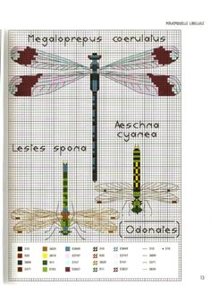 Gallery.ru / Photo # 14 - MARABOUT Insects - tatasha Cross stitch scientific diagrams insects labelled victorian insect collection bead work