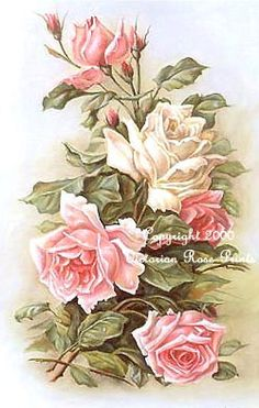Print FREE SHIP Shabby Pink & White Cabbage Roses Catherine Klein CP94a Half Yard Long. $11.99, via Etsy.