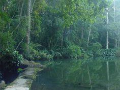Tijuca atlantic rain forest