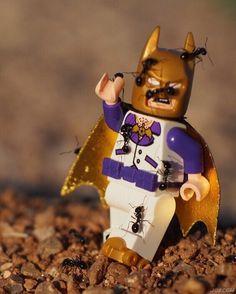Batman demonstrates the origins of disco...     . #discobatman #lego #anthill #minifiguresbigworld #afol #legominifigures #toyslagram_lego #instalego #legostagram #brickcentral #legoart #legography #legogram #joecowlego #brickpichub #bricknetwork #toyartistry_lego #lego_hub #brickshift #vitruvianbrix #stuckinplastic #brickculture #toy_photographers #utahtoycrew #discoorigins