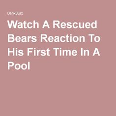Watch A Rescued Bears Reaction To His First Time In A Pool Felt Hearts, Trending Topics, First Time, Bears, Science, Watch, Clock, Bracelet Watch, Clocks