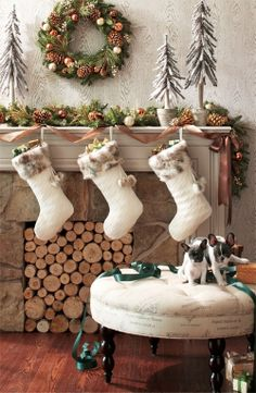Christmas  Love the pups in the photo !