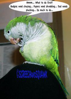 Quaker Parrot funnies