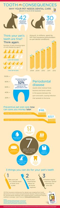Tooth or Consequences Pet Dental Care: An Infographic from VPI Pet Insurance