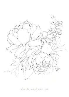 Rose Illustration, Illustration Design Graphique, Illustration Botanique, Floral Illustrations, Botanical Illustration, Graphic Illustration, Flower Line Drawings, Flower Sketches, Art Sketches