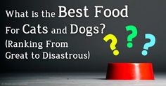 Learn Dr. Becker's recommendations on best-to-worst diets for dogs and cats, which will help improve the quality of the food you feed your own pet. http://healthypets.mercola.com/sites/healthypets/archive/2010/07/21/13-pet-foods-ranked-from-great-to-disastrous.aspx