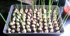 Cultiva Tus Ajos En Casa En 4 Sencillos Pasos Y Olvídate De Volver A Comprarlos.