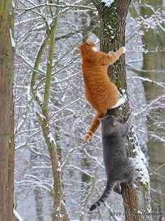 Ya verás qué divertido cuando estos dos escaladores suban y suban y ... miren para abajo. Vayan llamando a los bomberos.
