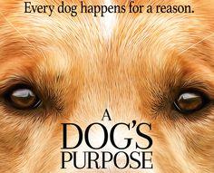 Este es el primer y emotivo trailer de A Dog's Purpose