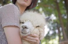 Fluffy alpaca is so fluffy you will probably die looking at it. His name is fluffy! Alpacas, Alpaca Plushie, Alpaca Drawing, Animals And Pets, Baby Animals, Llama Pictures, Big Friends, Funny Llama, Ostriches