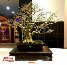 Bonsai Art, Bonsai Trees, Leaves, Fall, Nature, Inspiration, Gardening, Beautiful, Plants