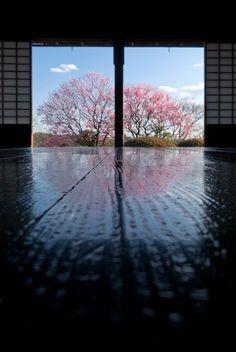 Kairaku-en garden, Ibaraki, Japan 偕楽園 Another one of my favorite places Ibaraki, Shizuoka, Japan Garden, Japanese Culture, Japanese Modern, Japanese Landscape, Japanese Gardens, Go To Japan, Sakura