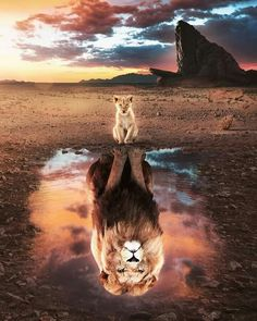Lion King Poster made out of metal. Inspiring image of The Lion King. Cute Cat Wallpaper, Lion Wallpaper, Cute Disney Wallpaper, Animal Wallpaper, Rainbow Wallpaper, Wallpaper Quotes, Wallpaper Backgrounds, Lion King Animals, Lion King Art