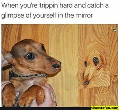 "Funny Doggo Memes That Will Get Your Tail Wagging - Funny memes that ""GET IT"" and want you to too. Get the latest funniest memes and keep up what is going on in the meme-o-sphere. Funny Animal Pictures, Dog Pictures, Best Funny Pictures, Funny Animals, Cute Animals, Funny Photos, Funny Dog Faces, Funny Dogs, Funny Puppies"