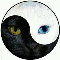 Shop Ying & Yang Cat Face - Lapel D Pin Button Badge. Arte Yin Yang, Yin Yang Art, Yin And Yang, Black Cat Tattoos, Tattoo Black, Yin Yang Tattoos, Cat Face, Cat Eyes, Cat Drawing