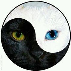 Shop Ying & Yang Cat Face - Lapel D Pin Button Badge. Arte Yin Yang, Ying Y Yang, Yin Yang Art, Yin And Yang, Ying Yang Symbol, Black Cat Tattoos, Tattoo Black, Yin Yang Tattoos, Cat Face