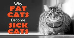 Are You Enabling YOUR Cat to Be Fat? According to the most recent research by the APOP, 58 percent of American kitties are overweight, and 28 percent are considered obese. http://healthypets.mercola.com/sites/healthypets/archive/2016/02/15/overweight-cats.aspx