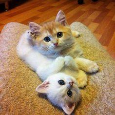 Cutest kitties!