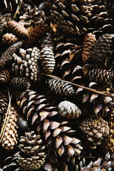 Autumn sensory box # Pine cones activates touch sense in the box. The texture and color can inhance the autumn season. Theme Nature, Autumn Photography, Camping Photography, Mountain Photography, Autumn Aesthetic Photography, Magical Photography, Wild Photography, Adventure Photography, Color Photography