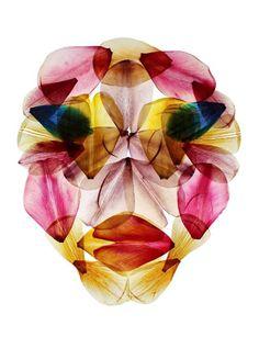 Tulip Mania prints by Hilde Koenders