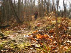 Frontenac Provincial Park Hiking Boots, Places To Visit, Park, Parks
