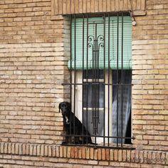 A curious dog keeps an eye on the street in Zaragoza, Spain.