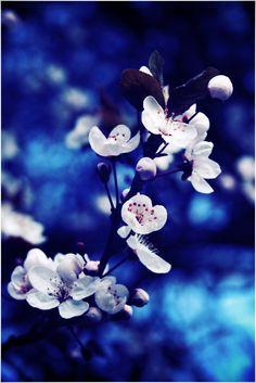 Blue Flower by CreamyJem.deviantart.com on @DeviantArt
