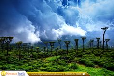 Beautiful Tea Estate in Sri Lanka  |  🔷 Book Now: https://www.taprobanetravel.co.uk/?utm_source=pinterest&utm_campaign=beautiful-tea-estate-in-sri-lanka&utm_medium=social&utm_term=sri-lanka  |  #traveller #travelling #srilanka #teaestate #taprobanetravel #bestplacetotravel #bookflights #travel #flights #cheapflightstosrilanka #asia #bookcheapflights #booknow #callnow #cheapflights #travellife #travelphoto #travelblog #travelstoke #travel2017