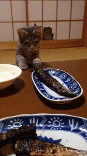 可愛い可愛いネコの画像 or GIFアニメ求む