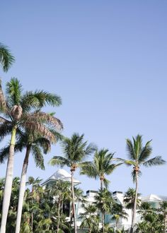 palms on palms on palms