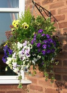 Good Photographs Hanging Baskets garden Ideas Hanging baskets will be a perfect way to have colouring and dilemma to the sunny walls or maybe entry ways por. Winter Hanging Baskets, Hanging Basket Garden, Plants For Hanging Baskets, Basket Planters, Winter Plants, Winter Flowers, Winter Garden, Fall Planters, Fauna