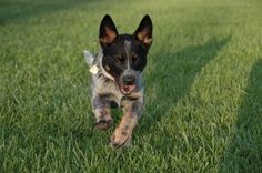 """Teaching Your Dog to """"Come When Called"""" 
