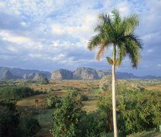 Preferido entre los admiradores de paisajes naturales espectaculares o de ensueño y cada vez por más viajeros de paso por Cuba, el Valle de Viñales es hoy un Parque Nacional enclavado en la occidental provincia de Pinar del Río, uno de los fértiles llanos relacionados con la Sierra de los Órganos.