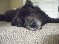 lazy animal(: