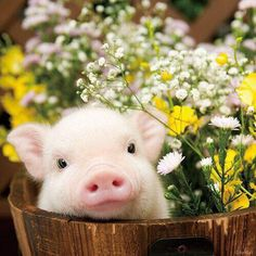 Piggy in a basket wiff flowers!!! Hnnngh