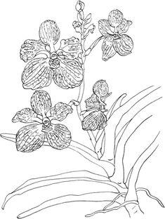 Vanda Coerulea or Blue Vanda Orchid Coloring page