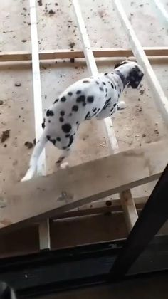 Funny Animal Jokes, Funny Animal Pictures, Cute Funny Dogs, Cute Funny Animals, Funny Dog Videos, Cute Animal Videos, Tier Fotos, Cute Little Animals, I Love Dogs