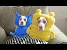 Ultimate Dog Shaming 2: Cute Dog Maymo & Puppy Penny - YouTube