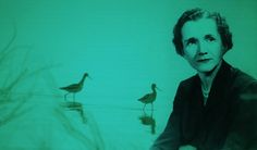"How to Make America Great Again: Rachel Carson on Protecting Nature and Heeding Science as a Force of Democracy  ""The real wealth of the Nation lies in the resources of the earth — soil, water, forests, minerals, and wildlife… Their administration is not properly, and cannot be, a matter of politics."""