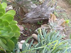 Succulent Gardening, Where The Heart Is, Succulents, West Coast, Cape, Plants, Mantle, Cabo, Succulent Plants