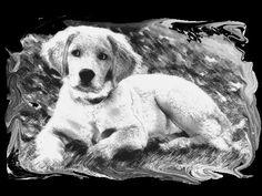 puppy t shirt golden retriever puppy t t by OriginalMindsTees
