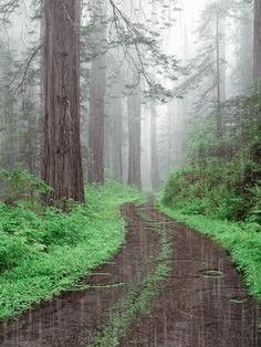 Rain Forest rain nature trees forest animated path gif