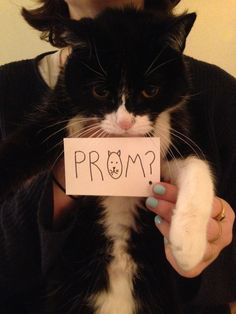 Or a cuddly cat! | 12 Best Ways To Ask Someone To Prom
