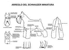 MuyVariado.com: Como cortar el Pelo a un Schnauzer